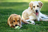/images/133/2012-04-10-chandler-park-both-153598.jpg - #10212: Bella and Lucy in Chandler … April 2012 -- Chandler, Arizona