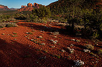 /images/133/2012-04-16-sedona-cathedral-154743.jpg - #10213: Images of Sedona … April 2012 -- Cathedral Rock, Sedona, Arizona