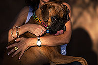 /images/133/2012-10-28-gilbert-harley-1dx_11976.jpg - #10302: Harley (Boxer) in Gilbert … October 2012 -- Gilbert, Arizona