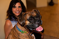 /images/133/2012-10-28-gilbert-harley-1dx_12248.jpg - #10304: Harley (Boxer) in Gilbert … October 2012 -- Gilbert, Arizona