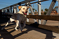 /images/133/2012-11-25-tempe-balou-5770.jpg - #10443: Balou at Tempe Town Lake … November 2012 -- Tempe Town Lake, Tempe, Arizona