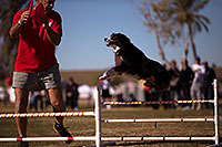 /images/133/2013-01-18-havasu-balloons-dogs-20196.jpg - #10709: Jumping dogs of Hot Dogs Club at Lake Havasu Balloon Fest … January 2013 -- Lake Havasu City, Arizona