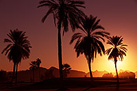 /images/133/2013-01-19-havasu-balloons-palms-20855.jpg - #10733: Palm Trees at sunrise at Lake Havasu… January 2013 -- Lake Havasu City, Arizona