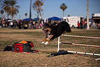 /images/133/2013-01-20-havasu-balloons-dogs-21670.jpg - #10748: Jumping dogs of Hot Dogs Club at Lake Havasu Balloon Fest … January 2013 -- Lake Havasu City, Arizona