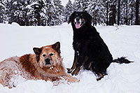 /images/133/2013-03-09-flagstaff-booda-dudle-29286.jpg - #10875: Booda and Dudley in snow in Flagstaff … March 2013 -- Flagstaff, Arizona