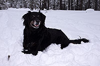 /images/133/2013-03-09-flagstaff-booda-dudle-29316.jpg - #10876: Booda and Dudley in snow in Flagstaff … March 2013 -- Flagstaff, Arizona