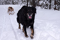 /images/133/2013-03-09-flagstaff-booda-dudle-29551.jpg - #10881: Booda and Dudley in snow in Flagstaff … March 2013 -- Flagstaff, Arizona
