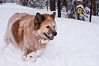 /images/133/2013-03-09-flagstaff-booda-dudle-29575.jpg - #10882: Booda and Dudley in snow in Flagstaff … March 2013 -- Flagstaff, Arizona