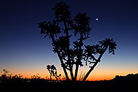 /images/133/2013-03-13-supers-cholla-silhoue-29733.jpg - #10884: Sunset in Superstitions … March 2013 -- Superstitions, Arizona