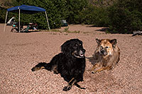 /images/133/2013-04-27-apache-lake-boo-dud-37202.jpg - #11066: Dudley and Booda at Apache Lake … April 2013 -- Apache Lake, Superstitions, Arizona