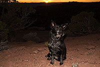 /images/133/2013-11-08-moab-mtns-kiera-1d4_4392.jpg - #11276: Kiera (Terrier, 1 year old) in Moab … November 2013 -- Moab, Utah