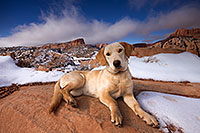 /images/133/2013-12-02-tsegi-annie-1dx_8550.jpg - #11373: Annie (Labrador Retriever) in Tsegi Canyon … December 2013 -- Tsegi Canyon, Utah