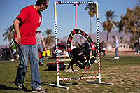 /images/133/2014-01-17-havasu-dogs-1dx_1450.jpg - #11618: Frisbee dog Sami at Lake Havasu Balloon Fest … January 2014 -- Lake Havasu City, Arizona