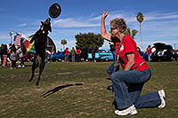 /images/133/2014-01-19-havasu-dogs-1dx_8255.jpg - #11685: Frisbee dog Sami at Lake Havasu Balloon Fest … January 2014 -- Lake Havasu City, Arizona