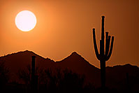 /images/133/2014-06-12-supers-sunset-10-11-5d3_009.jpg - #12297: Sunset in Superstitions … June 2014 -- Sunset Cactus, Superstitions, Arizona
