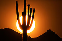 /images/133/2014-06-13-supers-sunset-5d3_0311.jpg - #12301: Sunset in Superstitions … June 2014 -- Sunset Cactus, Superstitions, Arizona