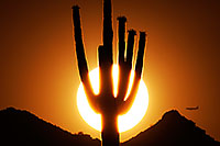 /images/133/2014-06-18-supers-sunset-plan-5d2_7510.jpg - #12303: Sunset in Superstitions … June 2014 -- Sunset Cactus, Superstitions, Arizona