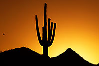 /images/133/2014-06-19-supers-sunset-1d4_0083.jpg - #12304: Sunset in Superstitions … June 2014 -- Sunset Cactus, Superstitions, Arizona