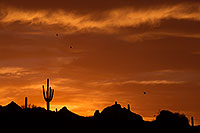 /images/133/2014-07-01-supers-sunset-cact-1dx_0690.jpg - #12306: Sunset in Superstitions … June 2014 -- Sunset Cactus, Superstitions, Arizona