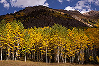 /images/133/2015-09-19-red-mountain-5d3_0956.jpg - #12684: Aspen trees along Red Mountain Pass, Colorado … September 2015 -- Red Mountain Pass, Colorado