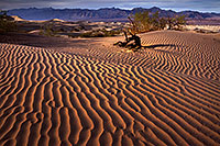 /images/133/2016-04-26-dv-mesquite-8-81-1dx_11175.jpg - #12959: Death Valley, California … April 2016 -- Mesquite Sand Dunes, Death Valley, California