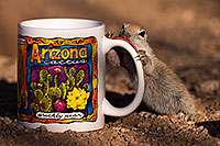 /images/133/2016-05-28-creatures-cup-1dx_18313.jpg - #13033: Round Tailed Ground Squirrel with Arizona mug … May 2016 -- Tucson, Arizona