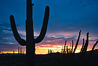 /images/133/2017-07-27-tuc-mtns-sunset-a7r2_00776.jpg - #13953: Sunset Saguaro silhouette in Tucson Mountains … July 2017 -- Tucson Mountains, Arizona