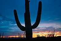 /images/133/2017-07-27-tuc-mtns-sunset-a7r2_00778.jpg - #13954: Sunset Saguaro silhouette in Tucson Mountains … July 2017 -- Tucson Mountains, Arizona