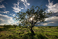 /images/133/2017-08-03-rita-sun-tree-a7r2_00199.jpg - #13974: Monsoon Clouds over Green Valley … August 2017 -- Green Valley, Arizona