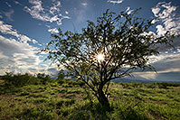 /images/133/2017-08-03-rita-sun-tree-a7r2_00208.jpg - #13982: Santa Rita Mountains … August 2017 -- Santa Rita Mountains, Arizona