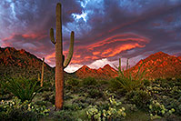 /images/133/2017-08-26-tuc-mtns-land-a7r2_02054.jpg - #14012: Sunset Saguaro in Tucson Mountains … August 2017 -- Tucson Mountains, Arizona