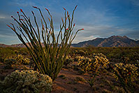 /images/133/2018-04-05-rita-ocotillo-mi100-a7r3_0687.jpg - #14259: Ocotillo and Santa Rita Mountains, Arizona .. April 2018 -- Santa Rita Mountains, Arizona