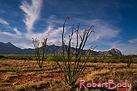 /images/133/2018-04-16-rita-ocotillo-morn-mi1-lq_0174.jpg - #14283: Morning at Santa Rita Mountains, Arizona … April 2018 -- Santa Rita Mountains, Arizona