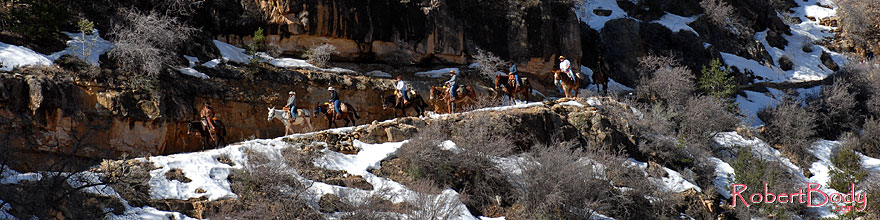 /images/500/2008-03-30-gc-ba-mul-6226sp.jpg - #05043: Mule riding group and snow spots along Bright Angel Trail in Grand Canyon … March 2008 -- Bright Angel Trail, Grand Canyon, Arizona