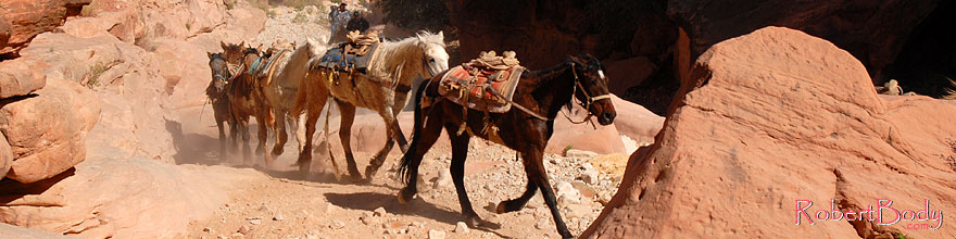 /images/500/2008-04-04-hav-mules-9692sp.jpg - #05126: Unloaded mules running free up Havasupai Trail of Havasu Canyon … April 2008 -- Havasupai Trail, Havasu Falls, Arizona
