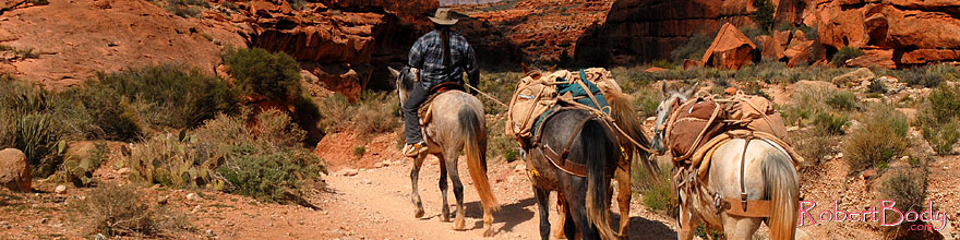 /images/500/2008-04-06-hav-can-1343sp.jpg - #05158: Mules along Havasupai Trail … April 2008 -- Havasupai Trail, Havasu Falls, Arizona
