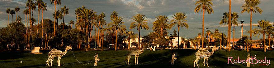 /images/500/2008-12-17-mesa-temple-caravan-64460sp.jpg - #06539: Camel caravan and Palm Trees by Mesa Arizona Temple … December 2008 -- Mesa Arizona Temple, Mesa, Arizona